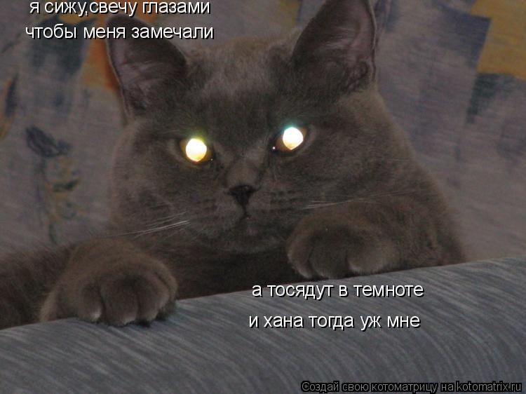Котоматрица: я сижу,свечу глазами чтобы меня замечали а тосядут в темноте и хана тогда уж мне