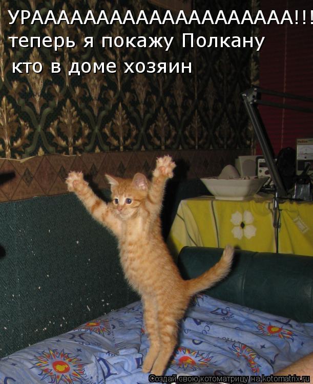 Котоматрица: УРАААААААААААААААААААА!!! теперь я покажу Полкану кто в доме хозяин