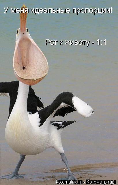Котоматрица: У меня идеальные пропорции! Рот к животу - 1:1