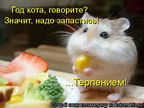 Котоматрица: Год кота, говорите? Значит, надо запастись! ...Терпением!