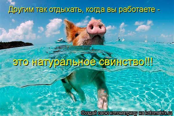 Котоматрица: Другим так отдыхать, когда вы работаете -  это натуральное свинство!!!