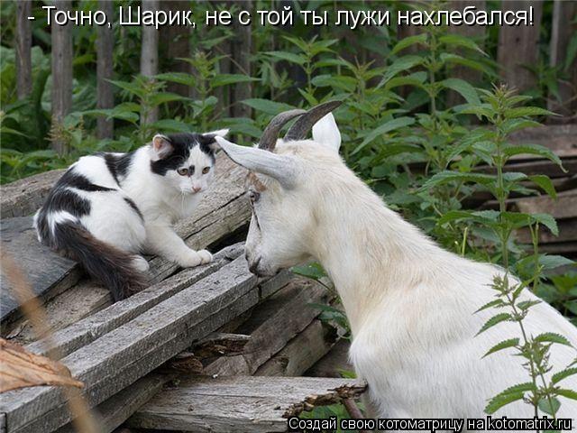 Котоматрица: - Точно, Шарик, не с той ты лужи нахлебался!
