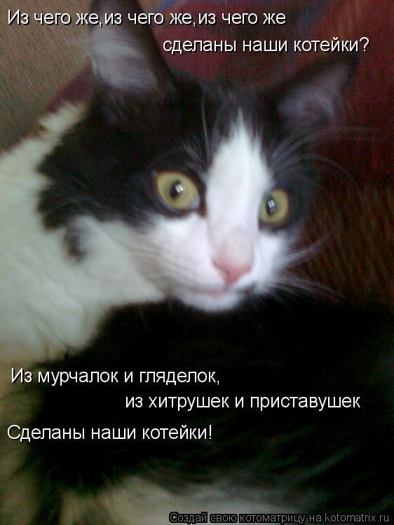 Котоматрица: Из чего же,из чего же,из чего же сделаны наши котейки? Из мурчалок и гляделок, из хитрушек и приставушек Сделаны наши котейки!