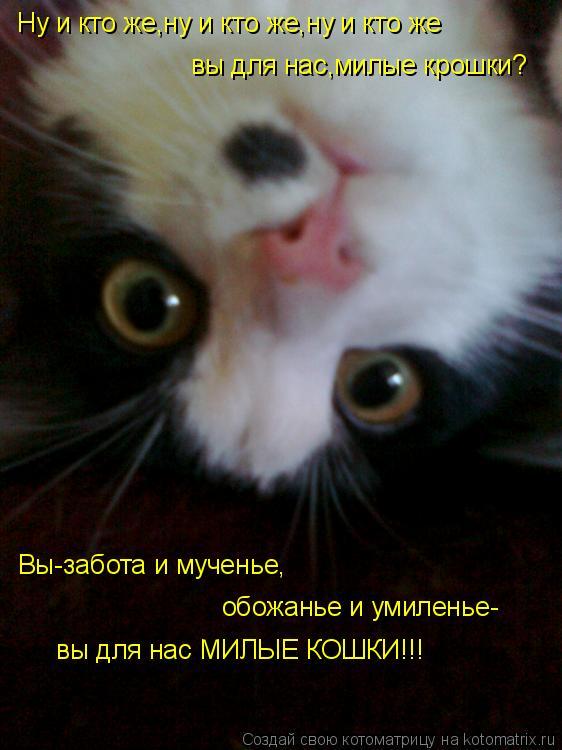 Котоматрица: Ну и кто же,ну и кто же,ну и кто же вы для нас,милые крошки? Вы-забота и мученье, обожанье и умиленье- вы для нас МИЛЫЕ КОШКИ!!!