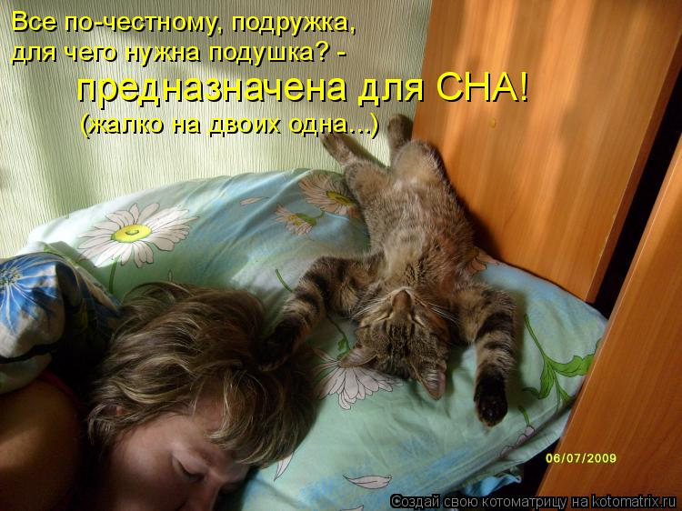 Котоматрица: Все по-честному, подружка, для чего нужна подушка? - предназначена для СНА! (жалко на двоих одна...)