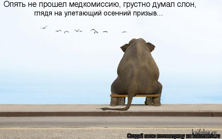 Котоматрица: Опять не прошел медкомиссию, грустно думал слон, глядя на улетающий осенний призыв...