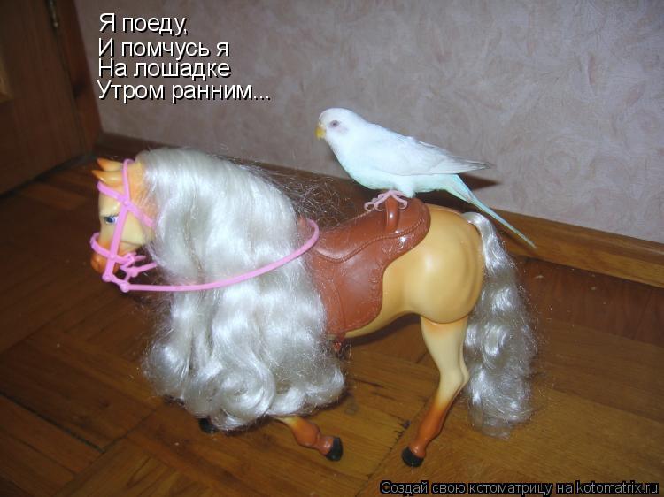 Котоматрица: Я поеду, И помчусь я На лошадке Утром ранним...