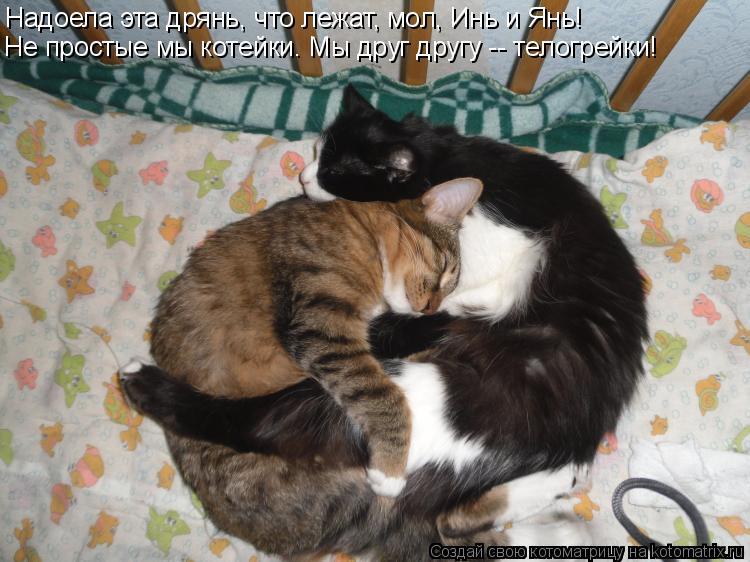 Котоматрица: Надоела эта дрянь, что лежат, мол, Инь и Янь! Не простые мы котейки. Мы друг другу -- телогрейки!
