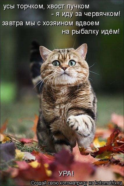 Кот с пучком