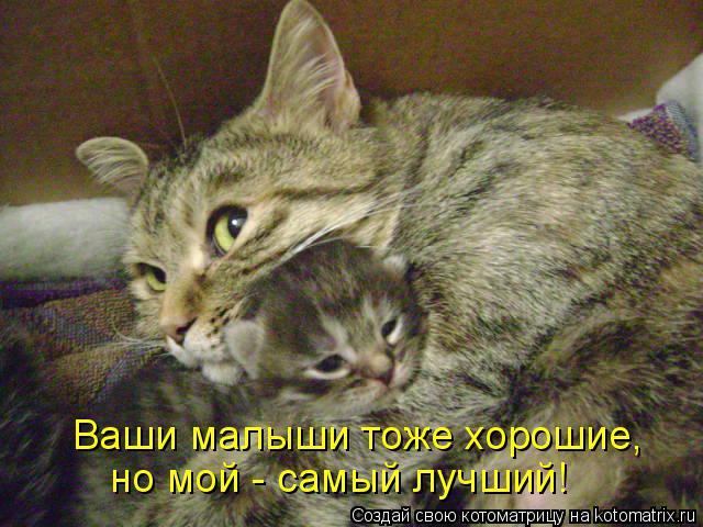 Котоматрица: Ваши малыши тоже хорошие,  но мой - самый лучший!