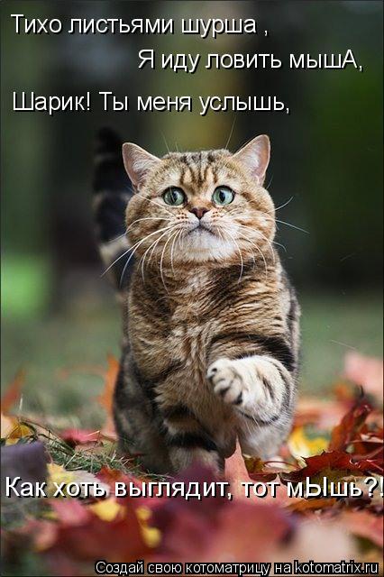 Котоматрица: Тихо листьями шурша , Я иду ловить мышА, Шарик! Ты меня услышь, Как хоть выглядит, тот мЫшь?!