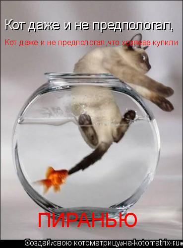 Котоматрица: Кот даже и не предпологал, Кот даже и не предпологал,что хозяева купили ПИРАНЬЮ