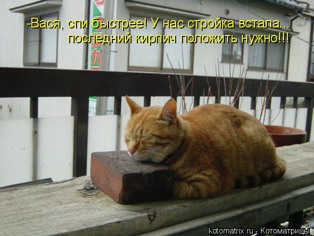 Котоматрица: -Вася, спи быстрее! У нас стройка встала... последний кирпич положить нужно!!!