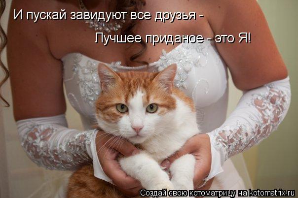 Котоматрица: И пускай завидуют все друзья -  Лучшее приданое - это Я!