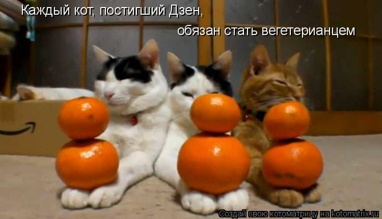 Котоматрица: Каждый кот, постигший Дзен, обязан стать вегетерианцем