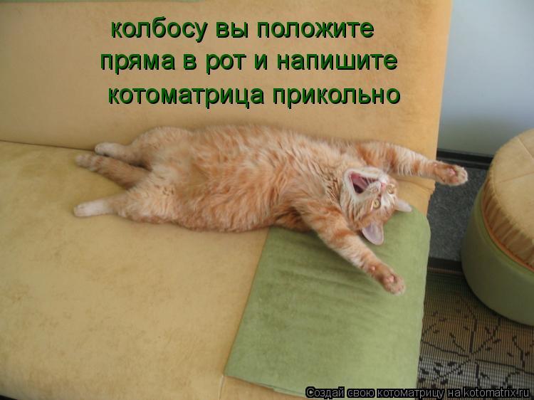 Котоматрица: колбосу вы положите  пряма в рот и напишите котоматрица прикольно