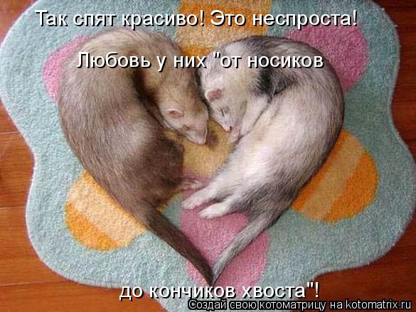 """Любовь у них """"от носиков  до кончиков хвоста""""! Так спят красиво! Это н"""