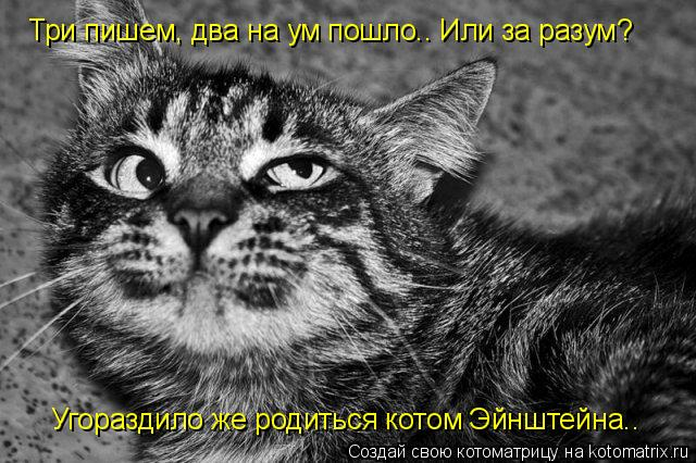 Котоматрица: Три пишем, два на ум пошло.. Или за разум?  Угораздило же родиться котом Эйнштейна..