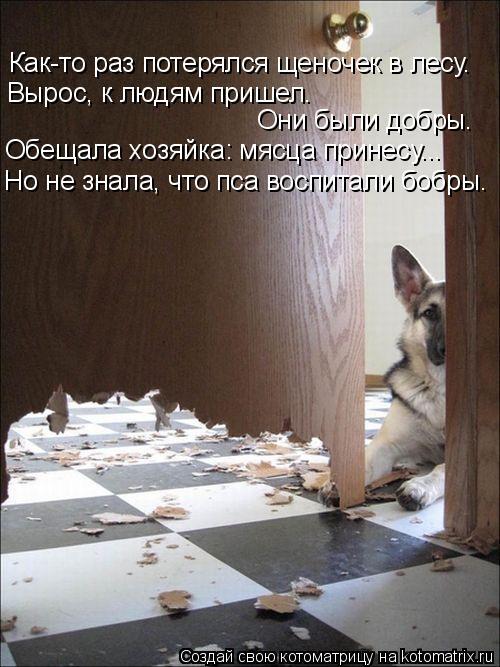 Котоматрица: Как-то раз потерялся щеночек в лесу. Вырос, к людям пришел. Они были добры. Обещала хозяйка: мясца принесу... Но не знала, что пса воспитали боб