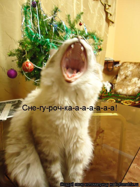 Котоматрица: Сне-гу-роч-ка-а-а-а-а-а-а!