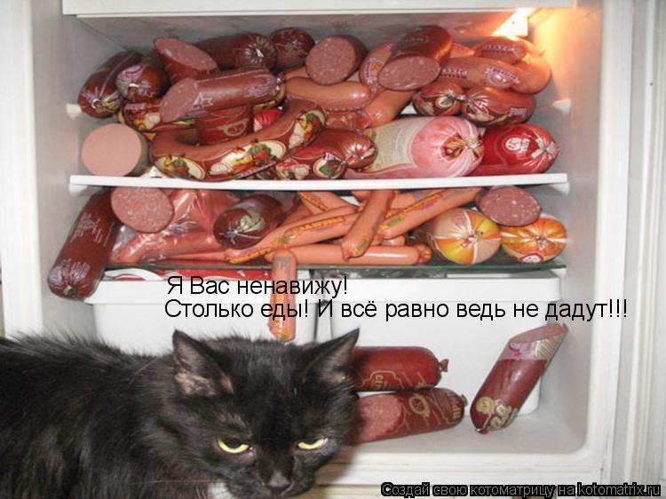 Котоматрица: Я Вас ненавижу!  Столько еды! И всё равно ведь не дадут!!!