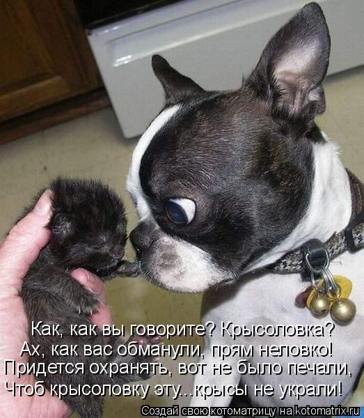 Крысоловка своими руками фото