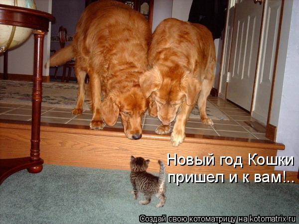 Котоматрица: Новый год Кошки  пришел и к вам!..