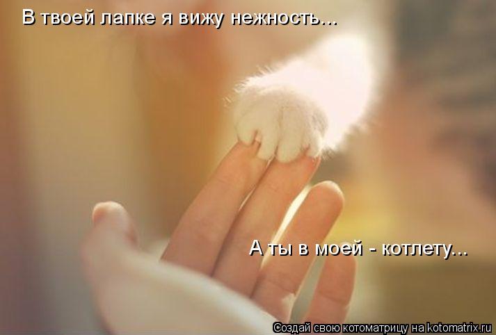 Котоматрица: В твоей лапке я вижу нежность... А ты в моей - котлету...