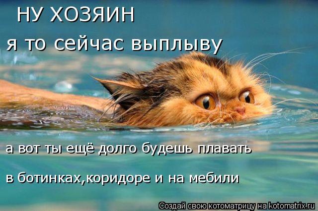 Котоматрица: НУ ХОЗЯИН я то сейчас выплыву а вот ты ещё долго будешь плавать в ботинках,коридоре и на мебили