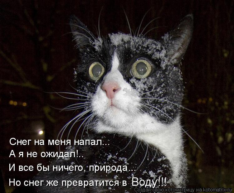 Котоматрица: Снег на меня напал... А я не ожидал!.. И все бы ничего, природа... Но снег же превратится в  Воду!!!