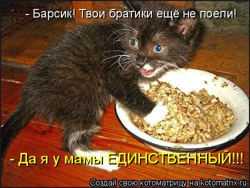 Котоматрица: - Барсик! Твои братики ещё не поели! - Да я у мамы ЕДИНСТВЕННЫЙ!!!