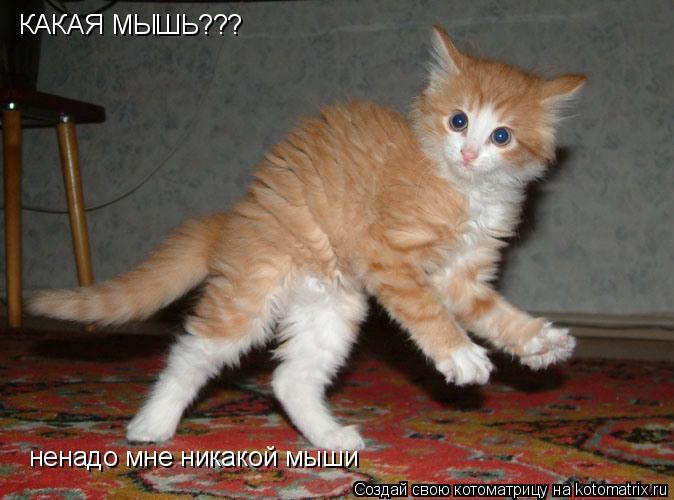 Котоматрица: КАКАЯ МЫШЬ??? ненадо мне никакой мыши