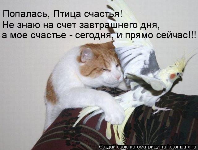 Котоматрица: а мое счастье - сегодня, и прямо сейчас!!! Не знаю на счет завтрашнего дня,  Попалась, Птица счастья!