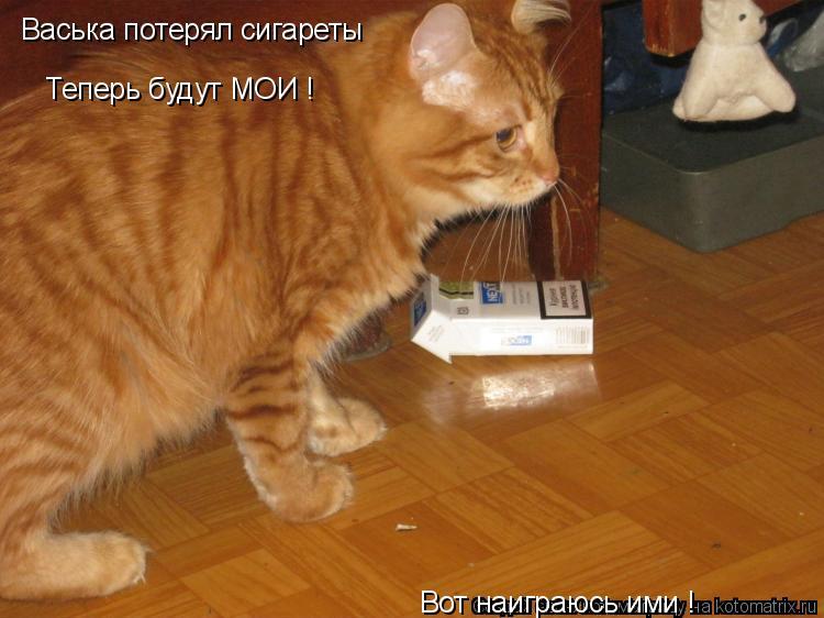 Котоматрица: Васька потерял сигареты Теперь будут МОИ ! Вот наиграюсь ими !