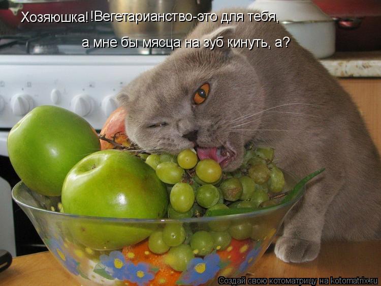 Котоматрица: Хозяюшка! !Вегетарианство-это для тебя,  а мне бы мясца на зуб кинуть, а?