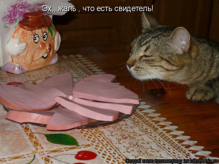 Котоматрица: Эх,, жаль , что есть свидетель! А так бы съел один кусочек !!! А так бы съел один кусочек !!!