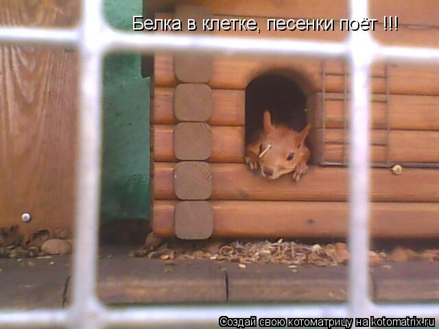 Котоматрица: Белка в клетке, песенки поёт !!!