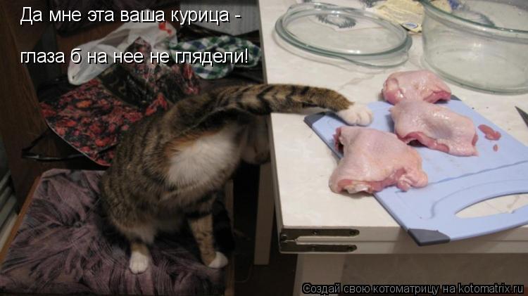 Котоматрица: Да мне эта ваша курица -  глаза б на нее не глядели!
