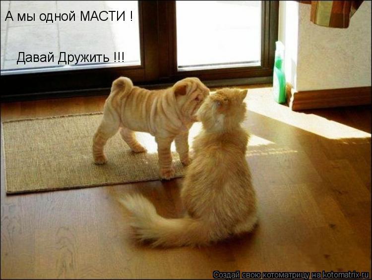 Котоматрица: А мы одной МАСТИ ! Давай Дружить !!!