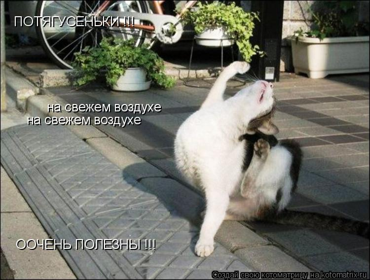 Котоматрица: ПОТЯГУСЕНЬКИ !!! на свежем воздухе на свежем воздухе  ООЧЕНЬ ПОЛЕЗНЫ !!!
