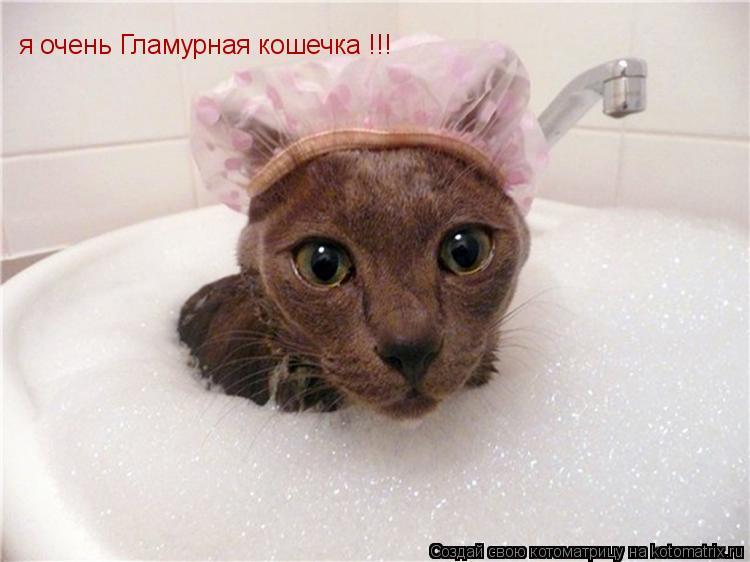 Котоматрица: я очень Гламурная кошечка !!! после ванны, люблю кофе !!!