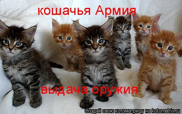 Котоматрица: кошачья Армия выдача оружия
