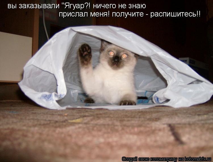 """Котоматрица: вы заказывали """"Ягуар?! ничего не знаю прислал меня! получите - распишитесь!!"""