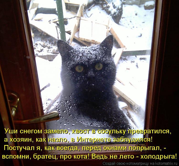 Котоматрица: Уши снегом замело, хвост в сосульку превратился, а хозяин, как назло, в Интернете заблудился! Постучал я, как всегда, перед окнами попрыгал, -