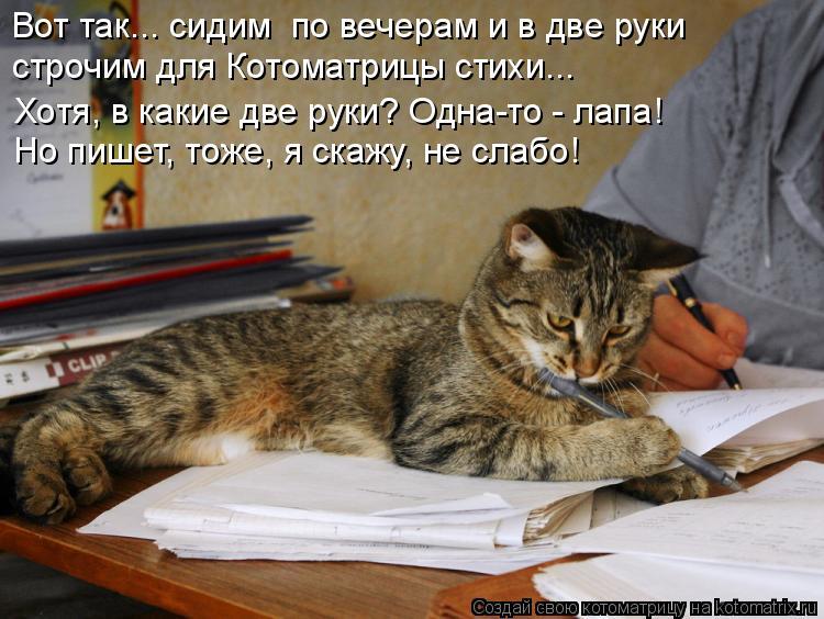 Котоматрица: Вот так... сидим  по вечерам и в две руки строчим для Котоматрицы стихи... Но пишет, тоже, я скажу, не слабо! Хотя, в какие две руки? Одна-то - лапа!