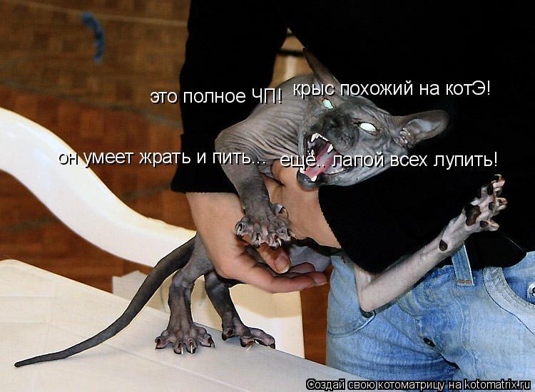 Котоматрица: это полное ЧП!  крыс похожий на котЭ! он умеет жрать и пить... ещё.. лапой всех лупить!