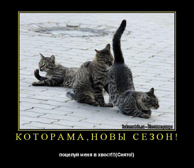 Котоматрица: которама,новы сезон! поцелуй меня в хвост!!!(Снято!)
