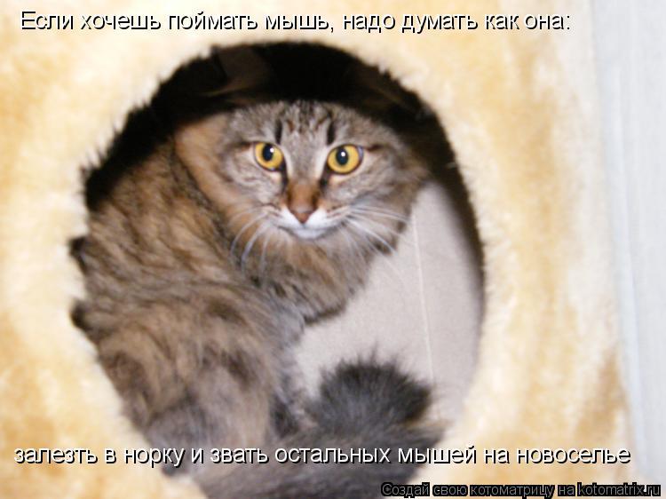 Котоматрица: Если хочешь поймать мышь, надо думать как она: залезть в норку и звать остальных мышей на новоселье