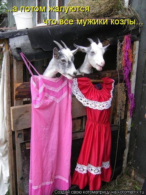 Котоматрица: ...а потом жалуются  что все мужики козлы...