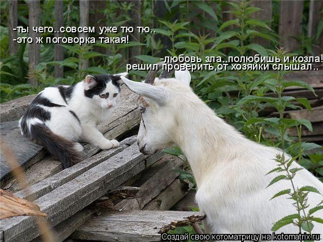 Котоматрица: -любовь зла..полюбишь и козла! -ты чего..совсем уже тю тю.. -это ж поговорка такая! решил проверить,от хозяйки слышал..